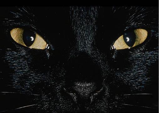 057-گربه عاشق و حسود در انتظار ورود معشوقه من بود